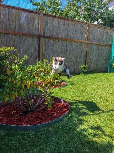 Cookie Jump